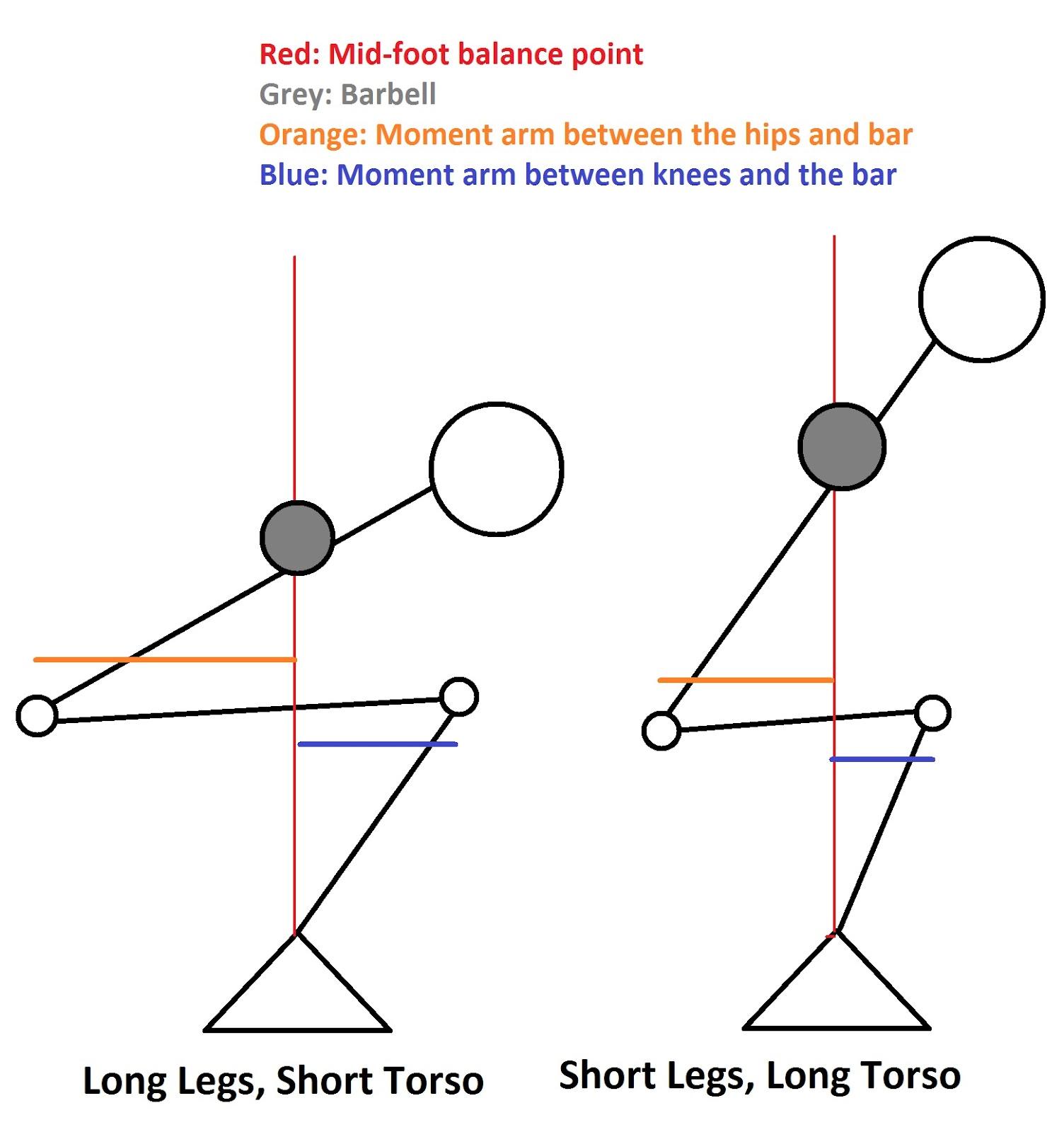 short-torso-vs-long-torso.jpg