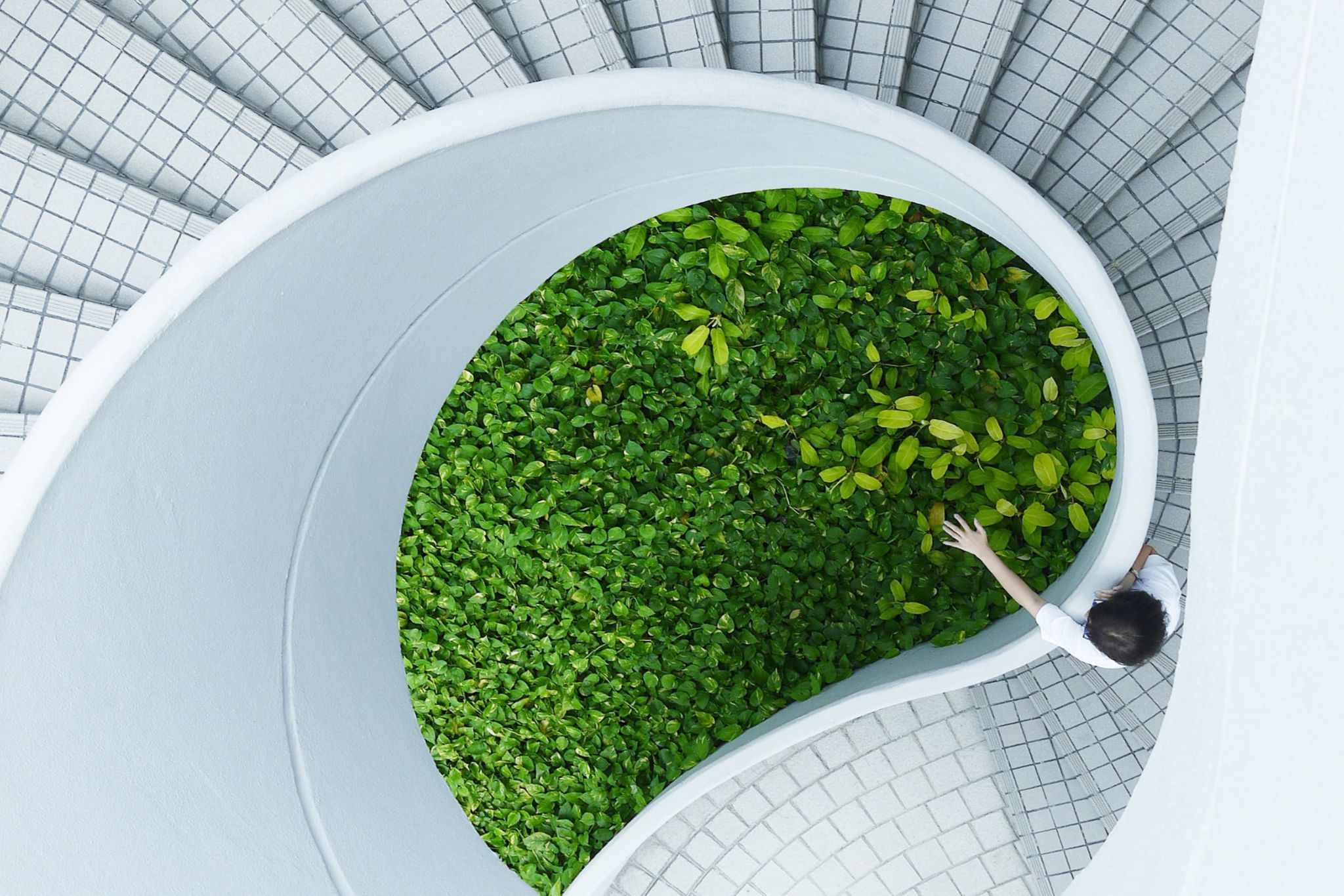 The stairwell of a modern office building playfully wrapping around a bed of plants.