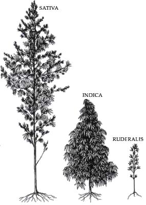 Immagine che contiene alberoDescrizione generata automaticamente