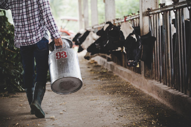 Milho e soja estão pressionando custos de produção de proteína animal