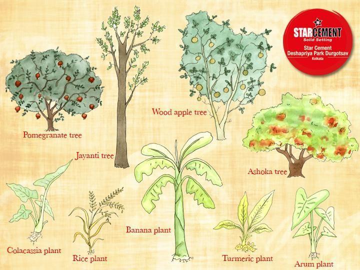 Star Cement on Twitter   Turmeric plant, Banana plants, Cement