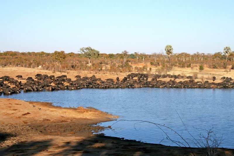 Hwange game reserve