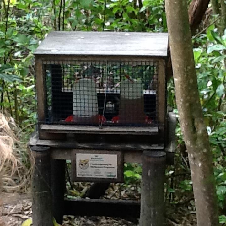 Bellbird feeding station.jpg