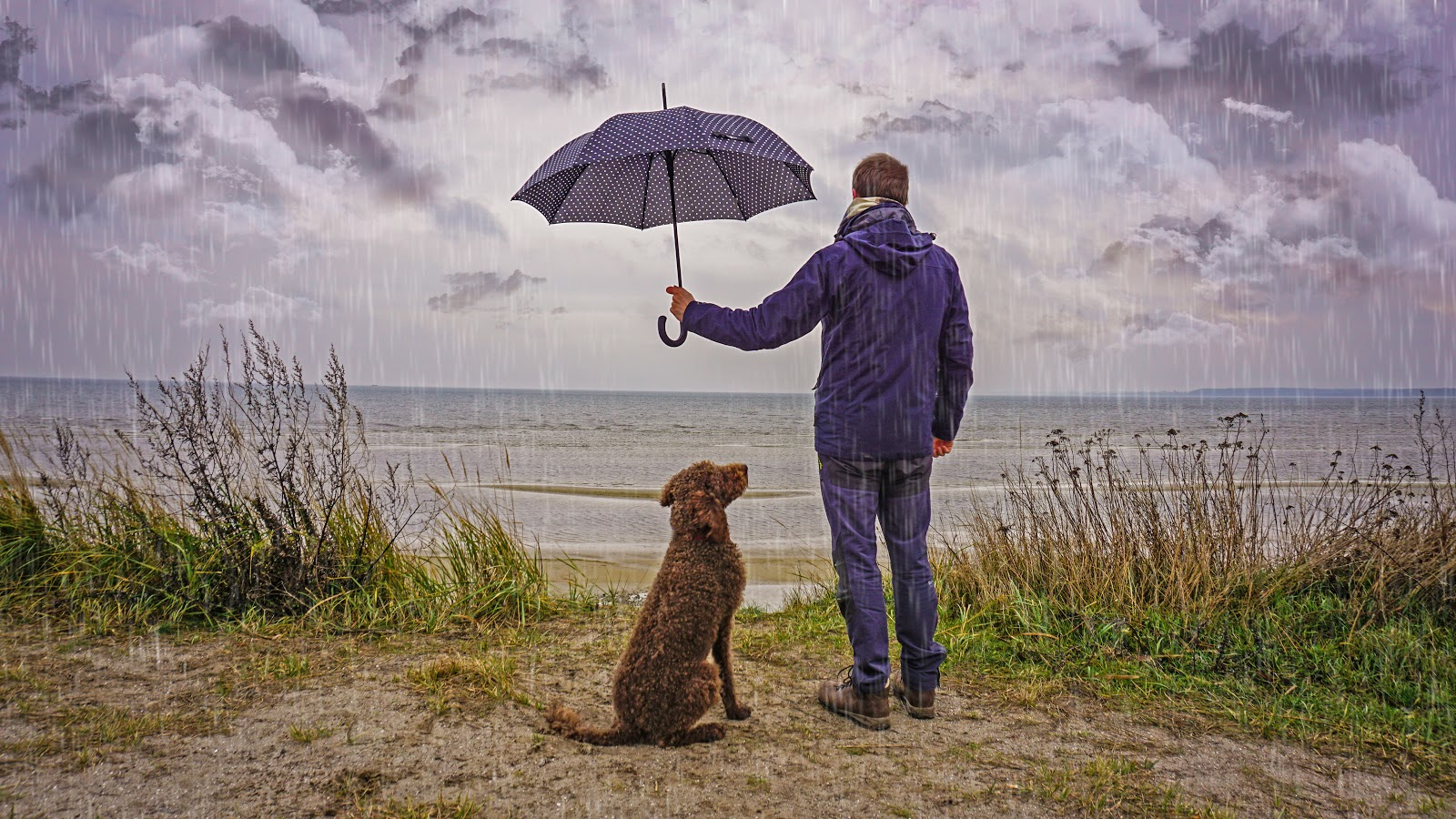 A man looking out onto the coast in the rain while holding an umbrella over his dog