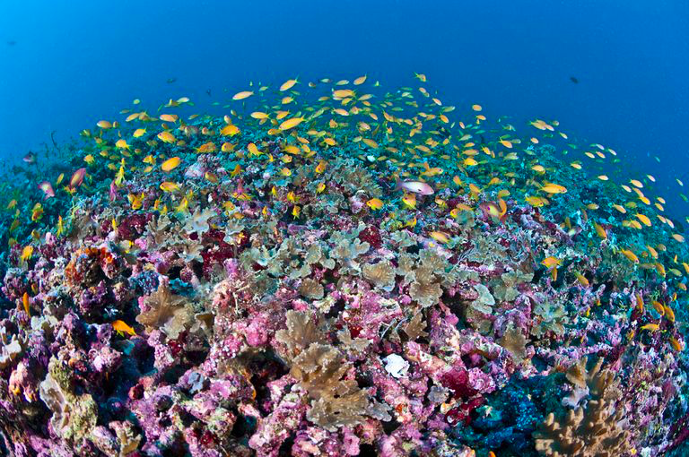 Coral reef in the ocean near maldives