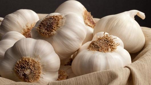 garlic health 16