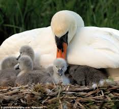 Image result for birds protecting their young