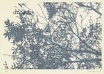 Zeefdruk op papier 50,5 x 69,7 cm (zonder lijst) Editie: 30 exemplaren € 350