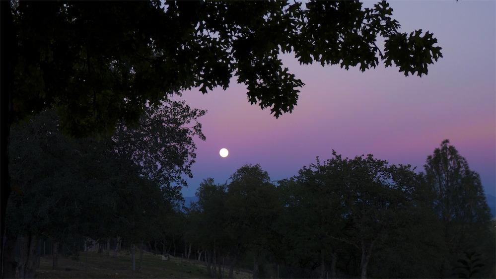 Blood Moon Rising.jpg