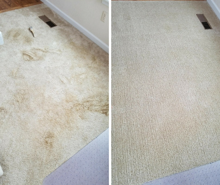 Before and after pet stained carpet, Hammond Knoll