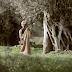 Ελιά..Αυτό το ευλογημένο δέντρο..!!..Δείτε ένα υπέροχο βίντεο - αφιέρωμα στο μάζεμα της ελιάς, κάνοντας ένα ταξίδι στο χρόνο