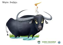 Image result for buffalo and bird cartoon