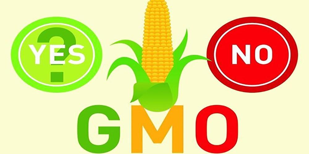Trái cây không hạt có phải biến đổi gen không?