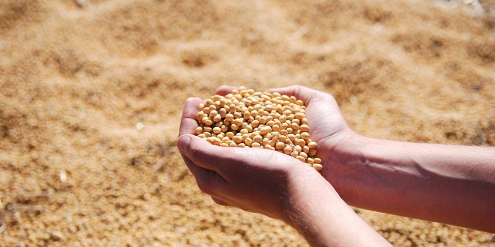Exportação de Soja (Fonte: Pixabay/Reprodução)