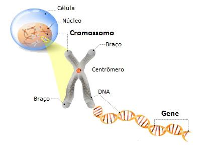 Onde se encontra o DNA