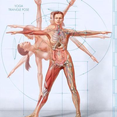 anatomy-female-yoga-1_wry.jpg