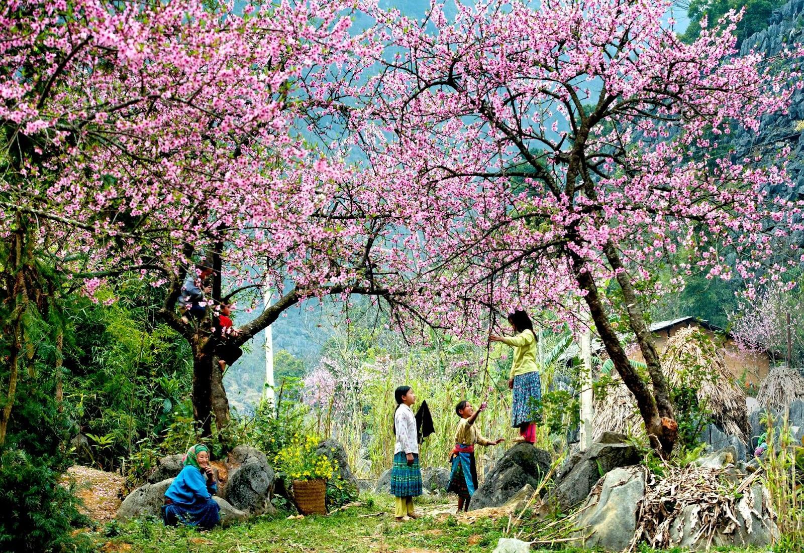 printemps-haute-montagne-vietnam