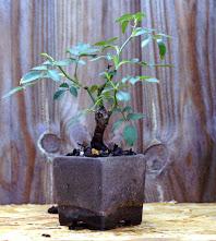 Voici mes plantes d'accompagnements Z1j89NkjpG-3Z_atNmR6mWHCC8v8JUixuRO8wIJYXQ=w198-h221-p-no