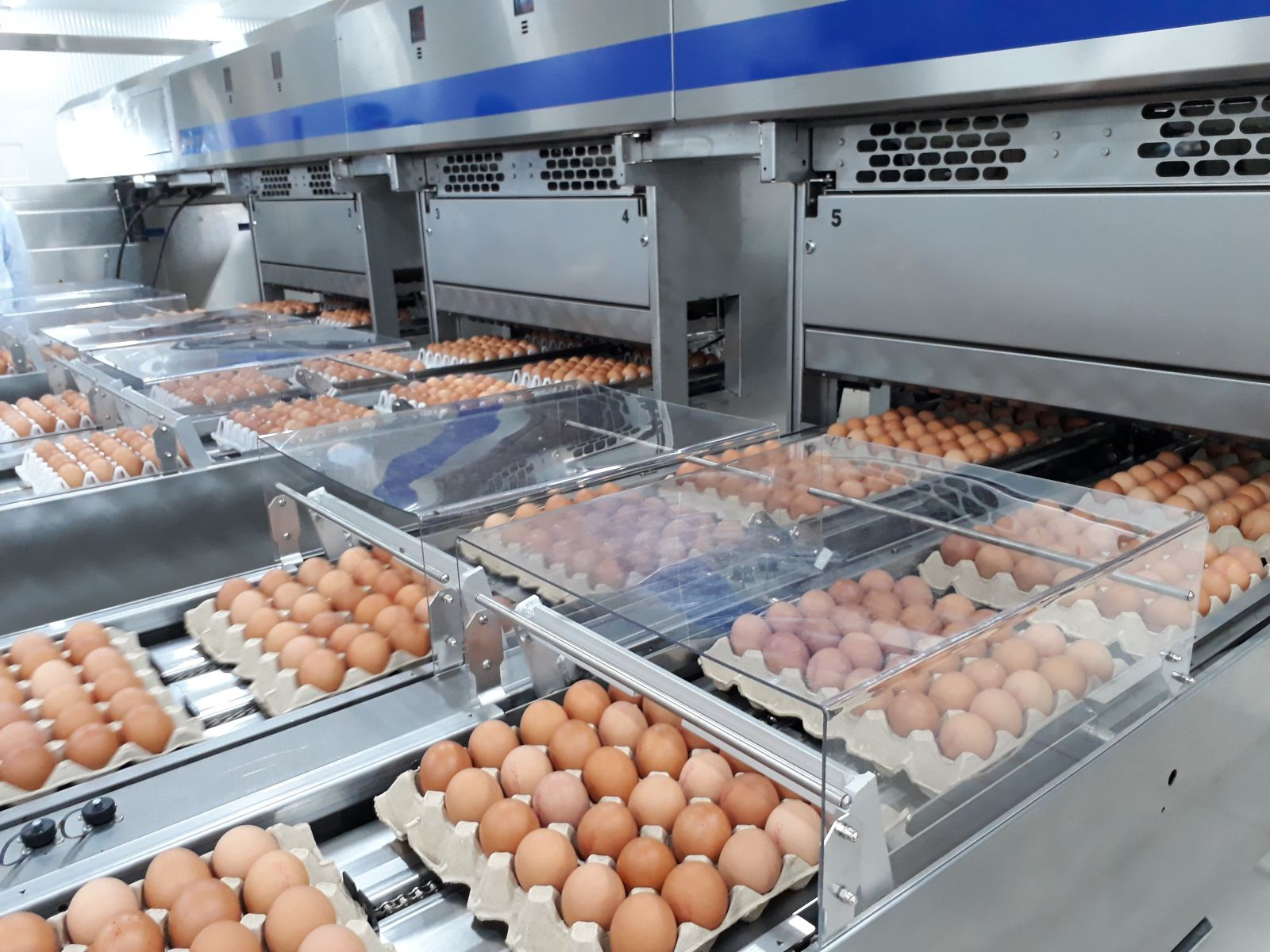 Thăm nhà máy xử lý, chế biến trứng gà trăm tỷ của Ba Huân » Kinh Tế Nông Thôn