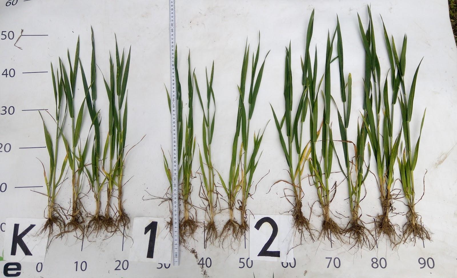 seeds2-photo-ecoorganic
