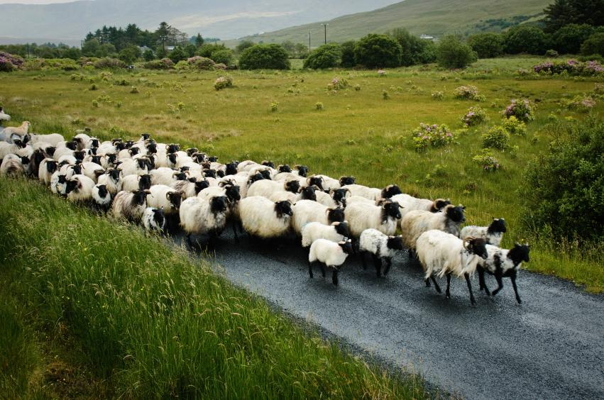 How Herd Mentality Can Pack Your Next Event | Constant Contact