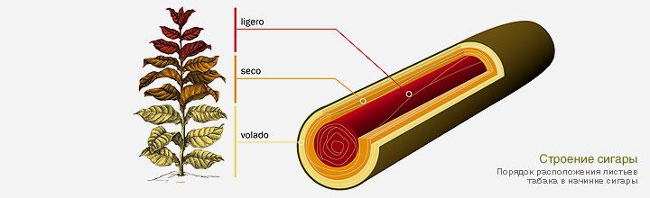 Из чего состоит сигара?