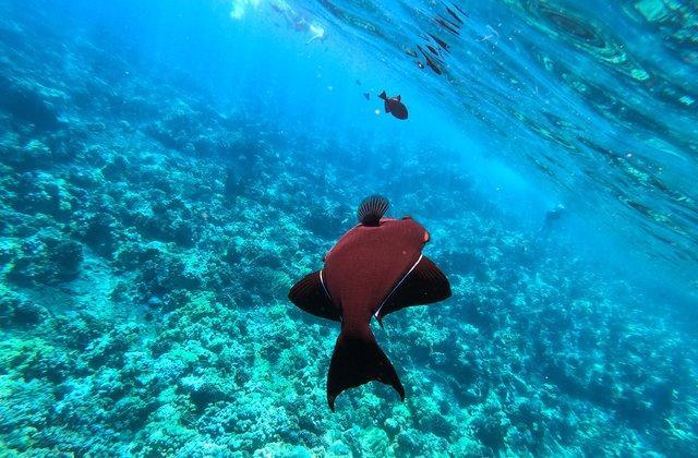 The Best Maui Snorkeling