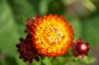 庭先を飾る花