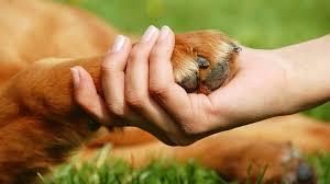 dog toenails