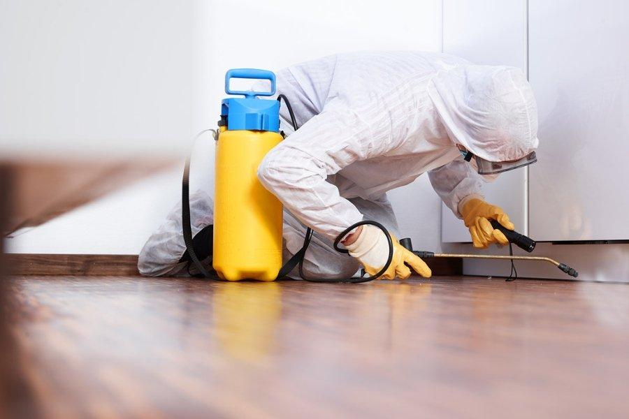 Is Your Home Pest Free? – Find Out Right Away