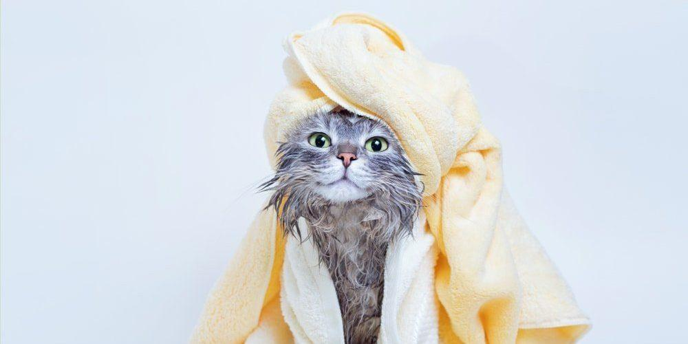Cat Bathing: See 5 Tips for Bathing Your Pet - Procão