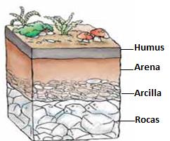 Los seres vivos y los elementos necesarios para la vida for El suelo y sus capas