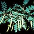 trees seeds