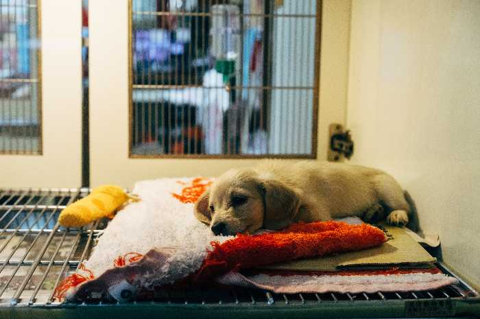pet insurance cost
