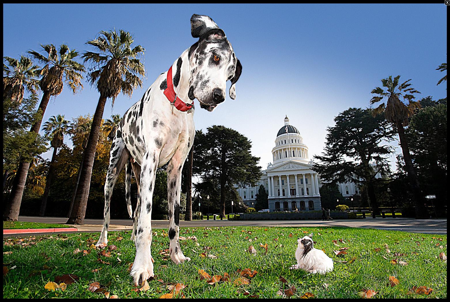 Los 10 Perros Más Grandes Del Mundo Wow Mascota