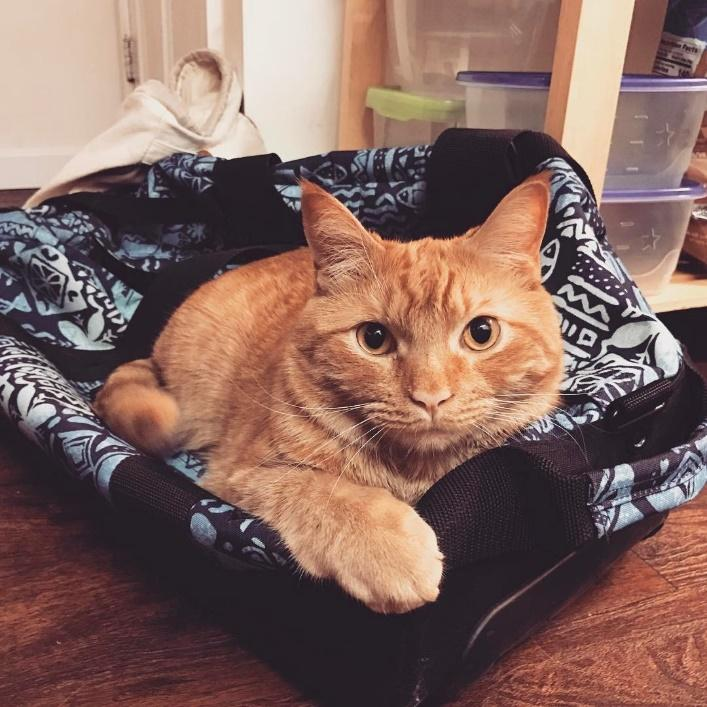 A cat lying on a bed  Description automatically generated with medium confidence
