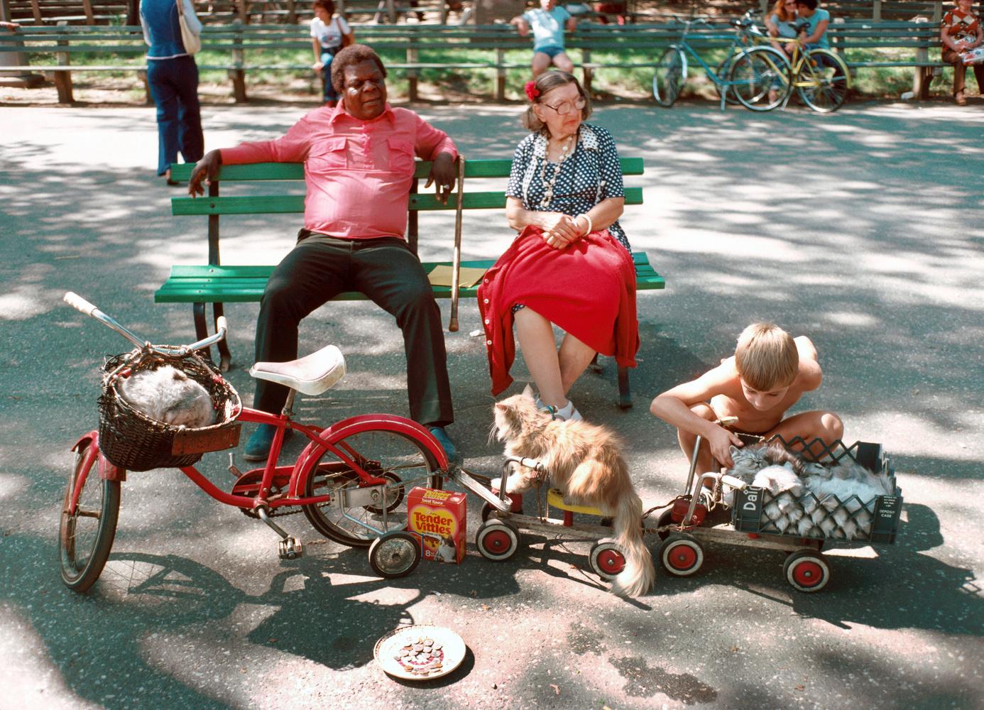 D. Gorton bench park
