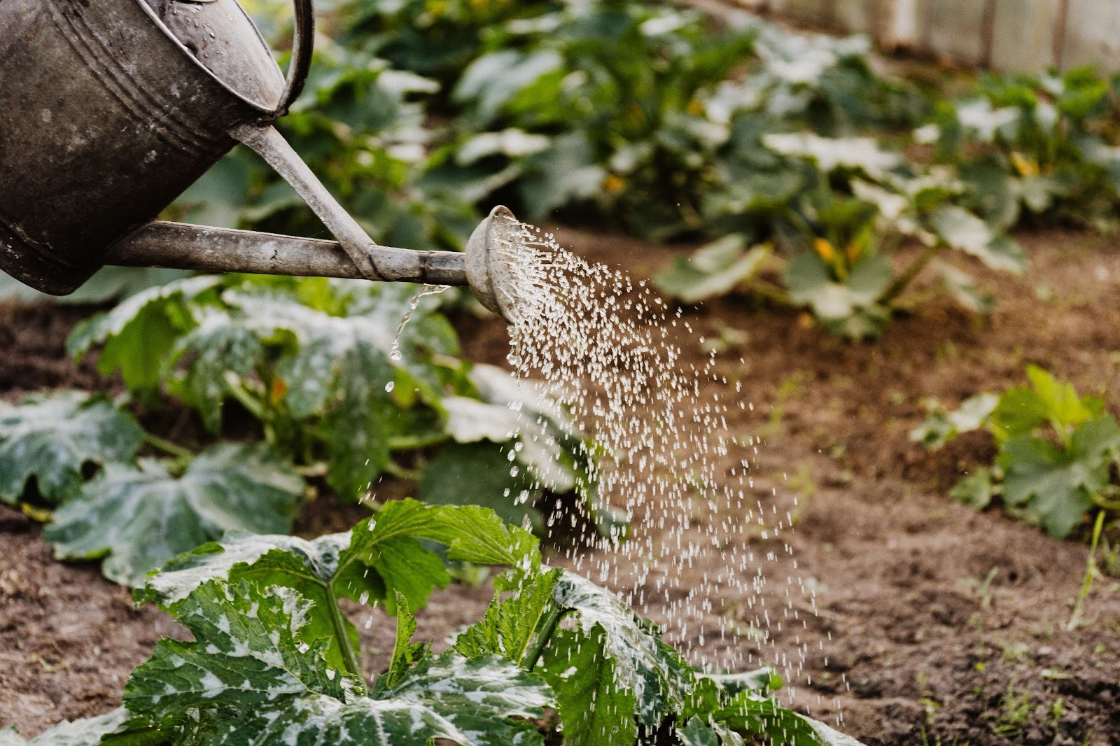 A Drop's Worth: The Value of Water For Food Security