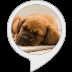 Calm My Dog Alexa Skill