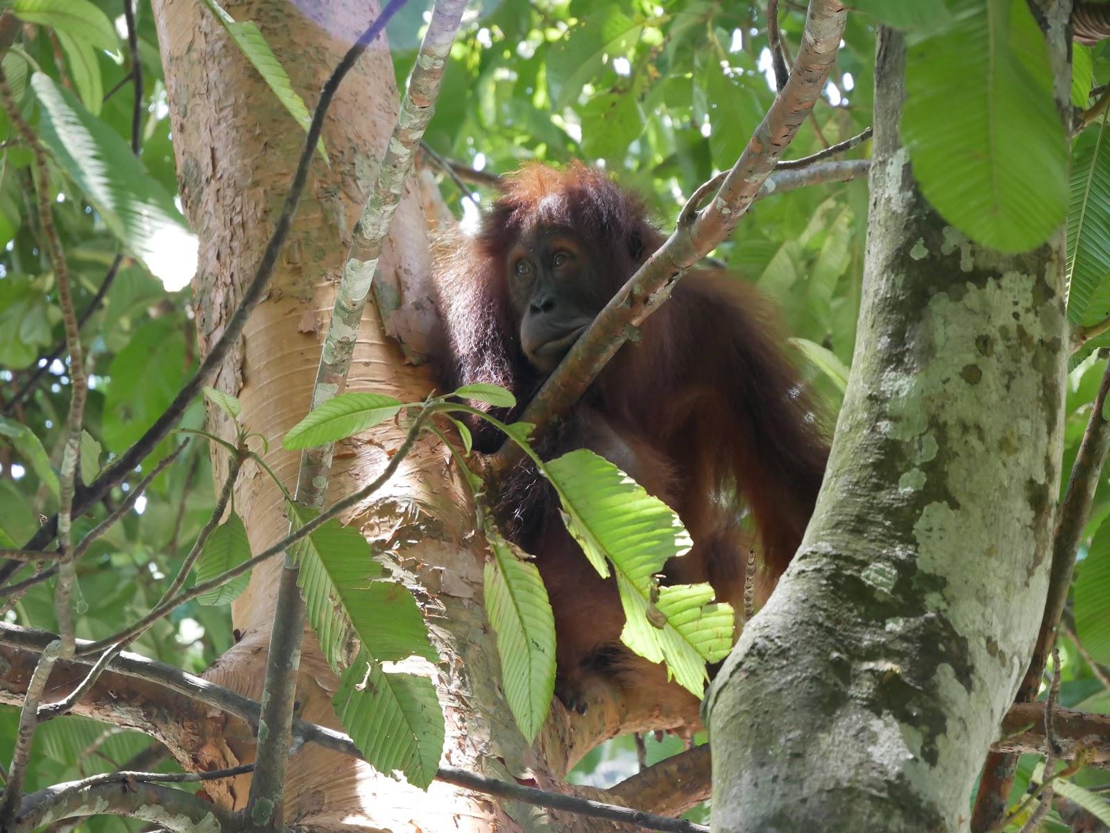 Guía para visitar Bukit Lawang- trekking en la selva