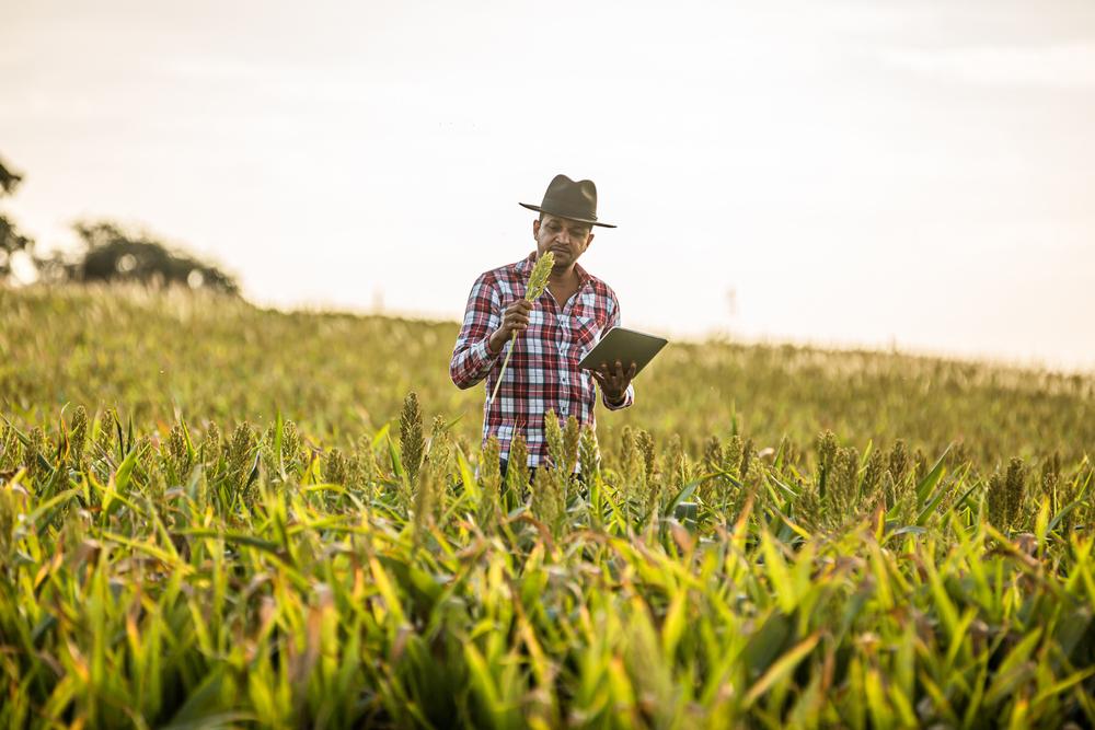 Homem com tablet analisando muda de plantação