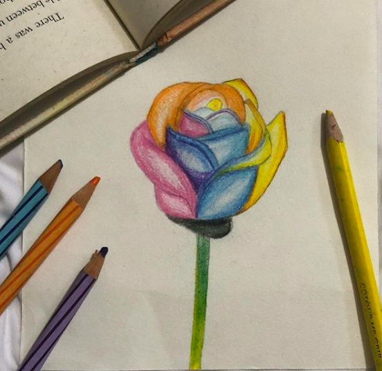 colorful rose drawing