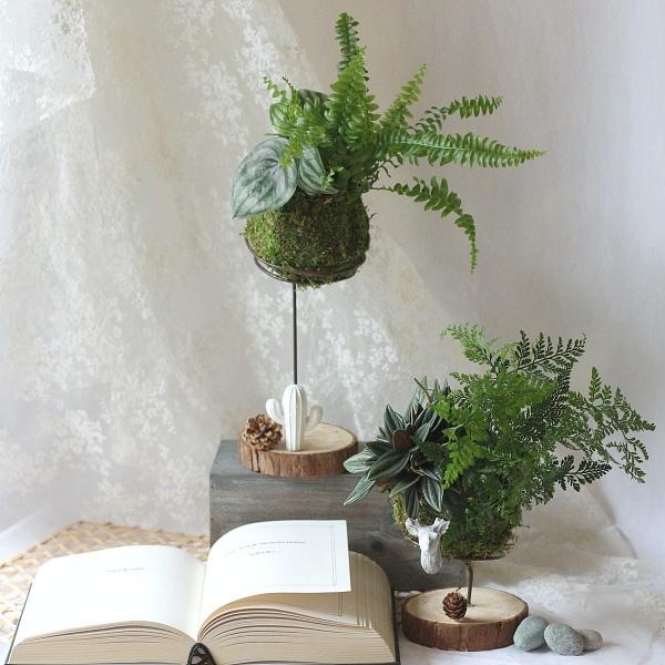 台北-原生態-苔球製作體驗